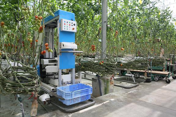 Panasonic создала «умного» робота-собирателя томатов на ферме