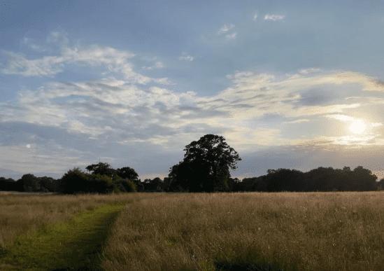 Последняя бета-версия iOS 15 позволяет автоматически удалять блики с фотографий